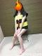 ゲゲゲの痴女~横浜最安値3800円~ の 砂かけ さゆりさん